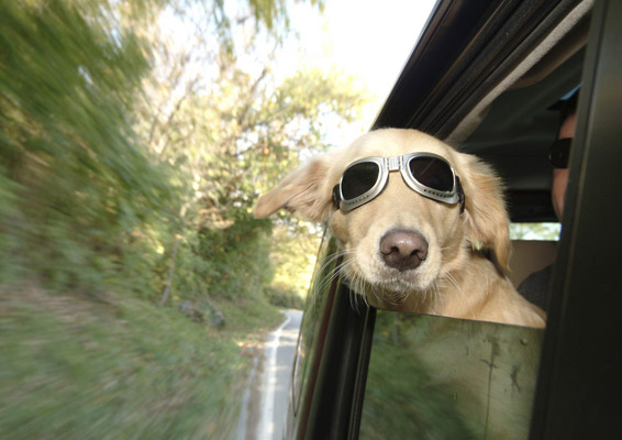 Hund-alene-hjemme