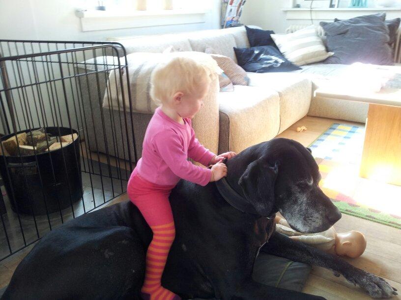 hunde og børn