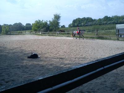 hund_hest