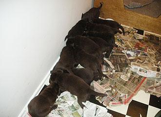 hundehvalpe-6-7_4