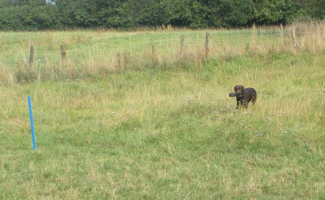 Hundedamen-2012--jagt-billeder-074