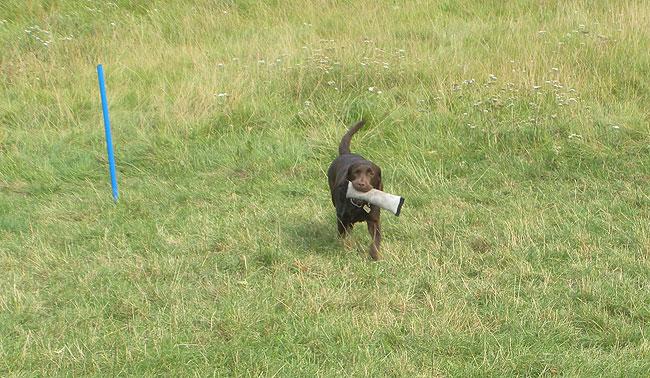 Hundedamen-2012--jagt-billeder-076