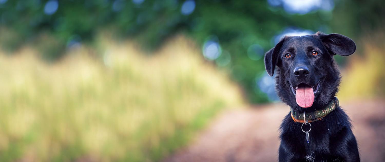 Professionel hundetræning for alle racer
