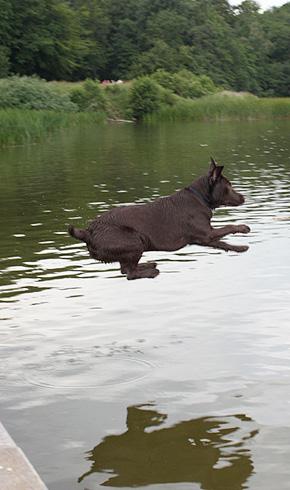 vandhund